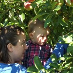 Apple picking 2014
